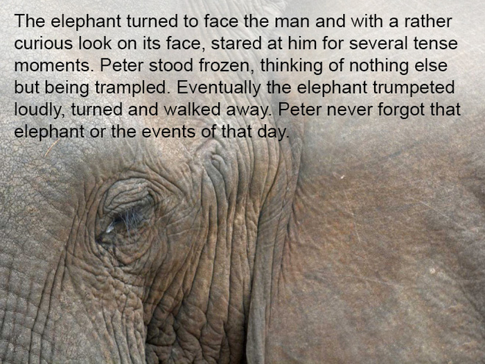 This Story Is Proof That Elephants Never Forget (9 pics)