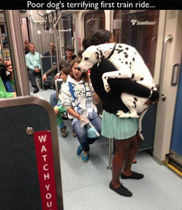 People and Animals Experience Big Life Moments For The First Time (36 pics)