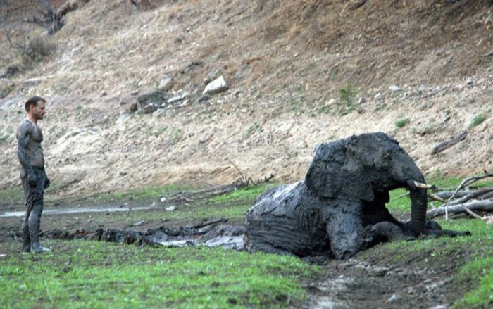 Elephant Gets Rescued After Getting Stuck In The Mud (15 pics)
