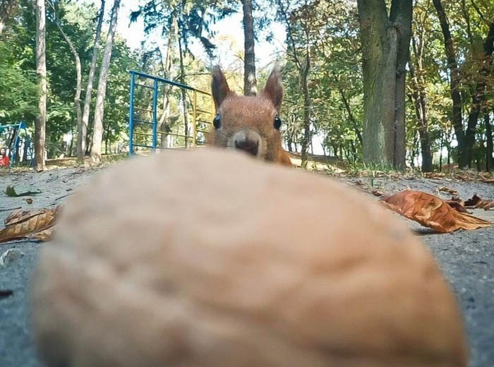 This Squirrel Just Wants A Nut (5 pics)