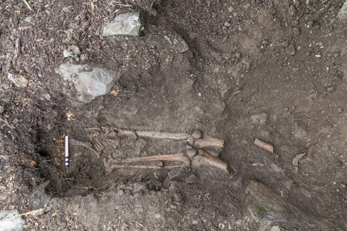 1,000 Year Old Skeleton Discovered Under Tree (2 pics)