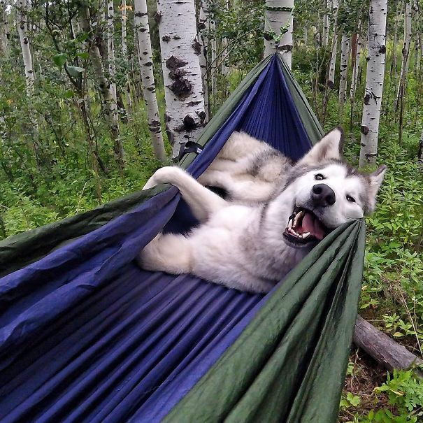 Camping With Dogs Is An Inspirational Instagram Account (38 pics)