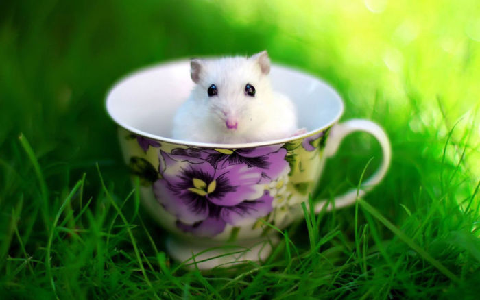 Adorable Hamsters That Are Too Cute For Words (30 pics)