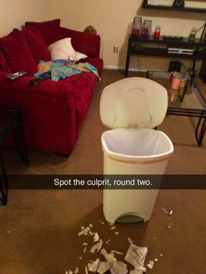 Funny Snapchat Pics That Are Perfect For Dog Lovers (15 pics)