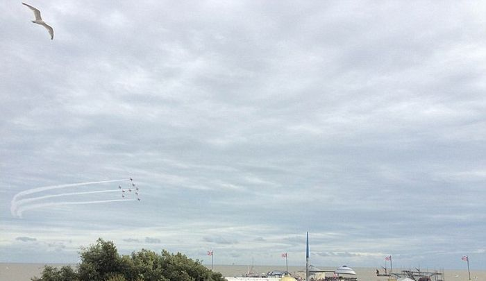 Seagull Photobombs Red Arrow Aerobatic Team (4 pics)