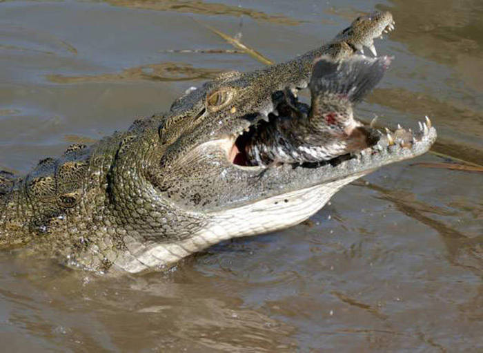 These Are The Animals That Have The Strongest Jaws (25 pics)