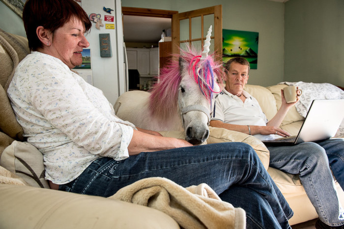 Meet The Couple That Shares Their House With A Unicorn (10 pics)