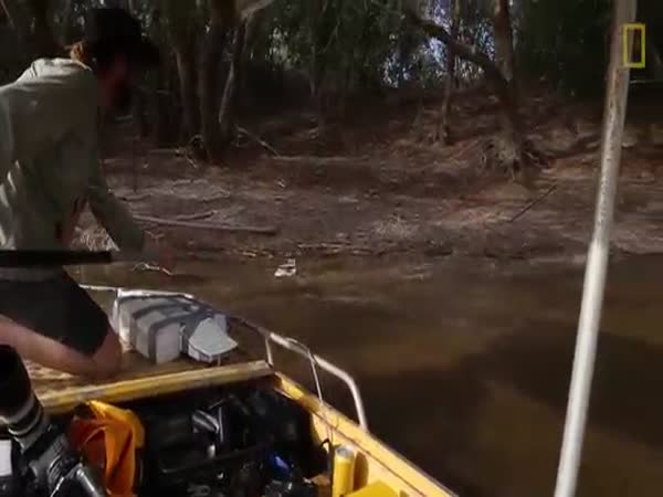 Inside A Crocodile's Mouth