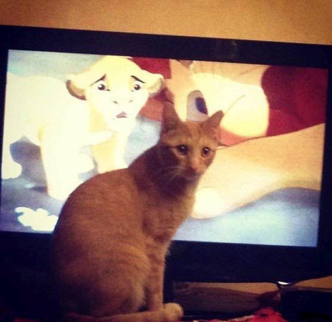 Cats Have A Tough Time Watching This Scene From The Lion King (3 pics)