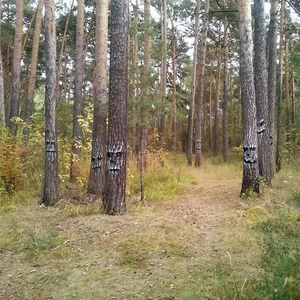 Somebody Put Faces On All The Trees (3 pics)