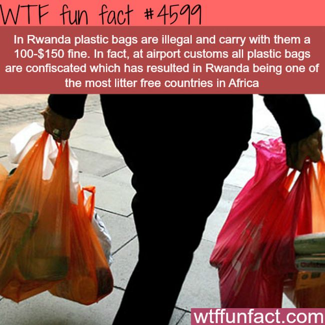 25 Fun Facts That Will Make You Say WTF (25 pics)