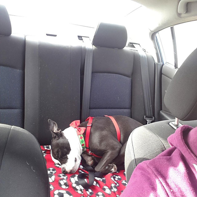 Shelter Dogs Take Their First Trip To Their Forever Home (28 pics)