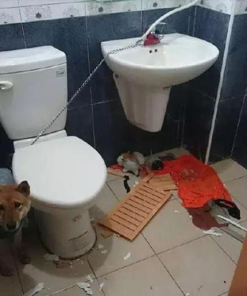 Locking A Dog Up In A Bathroom Is A Horrible Idea (3 pics)