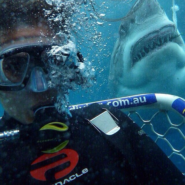 People Who Went To Great Lengths To Take Extreme Selfies (29 pics)