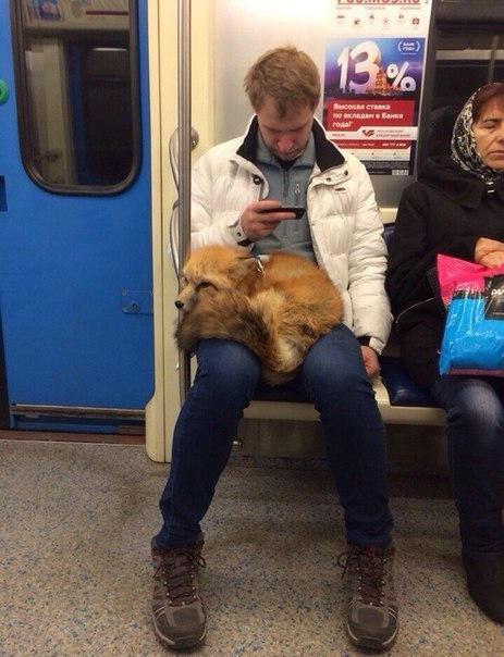 You Just Never Know What You're Going To See On The Moscow Metro (45 pics)