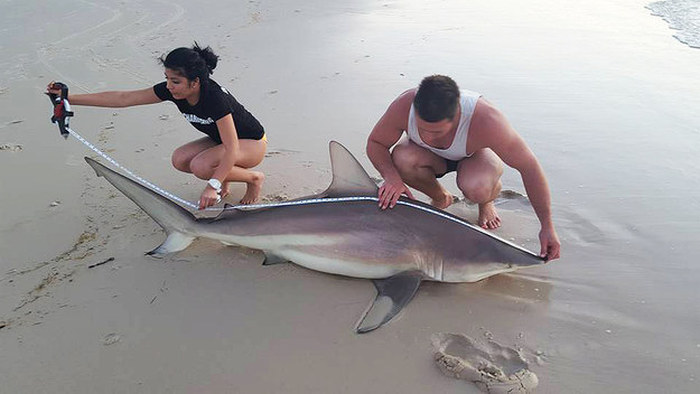 Meet The Teen That Catches Massive Sharks (10 pics)