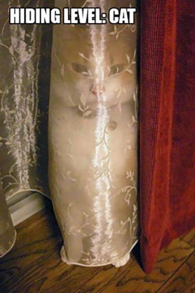 Cats That Got Caught Doing Strange Things (23 pics)