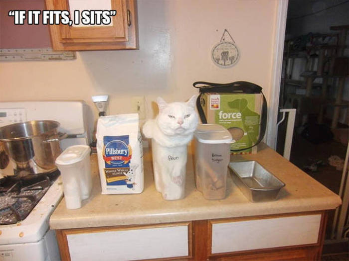 Cats That Got Caught Doing Strange Things (23 pics)