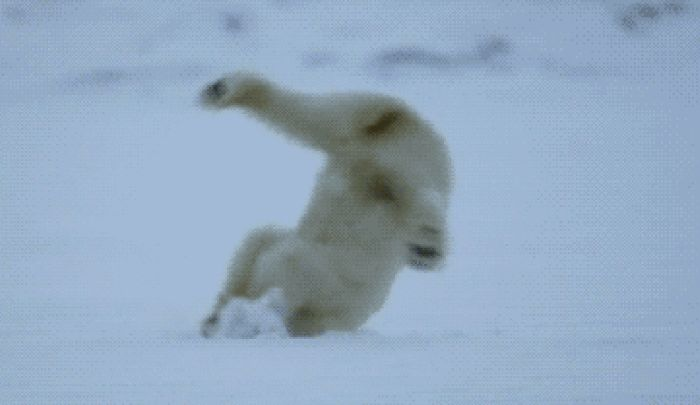 Awesome Animal Fails That Are Absolutely Hilarious (24 gifs)