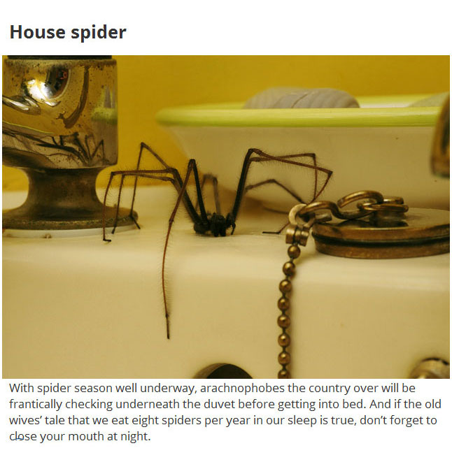 These 12 Disgusting Creatures Could Be Living In Your Home (12 pics)