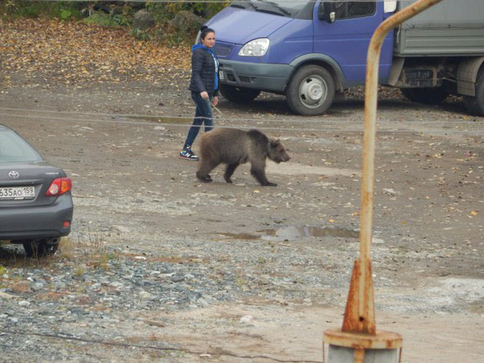 This Is Just A Normal Pet in Russia (4 pics)