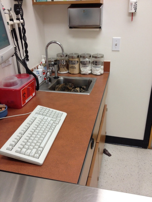 Cats Try Their Best To Hide From The Vet (15 pics)