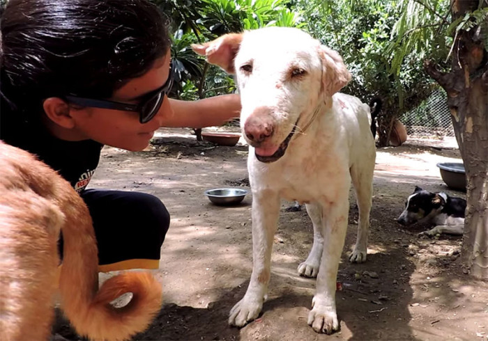 Sick Rescue Dog Gets A New Lease On Life (7 pics + video)