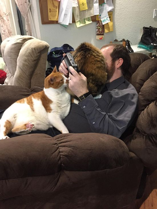 You Can Always Count On A Cat To Invade Your Personal Space (35 pics)