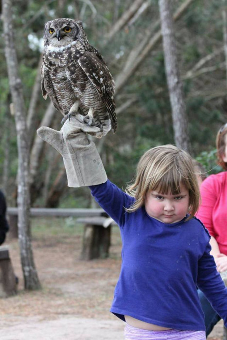 Unhappy Girl Holds An Owl, The Internet Reacts Accordingly (17 pics)