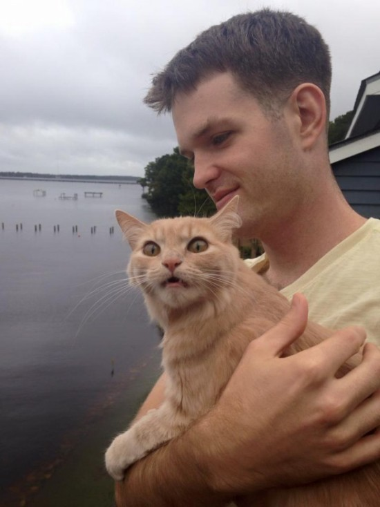 House Cat Freaks Out When It Sees The Outside World For The First Time (4 pics)