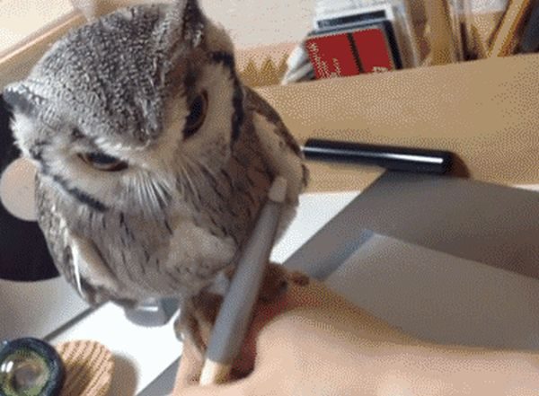 Owls Are Strange But Hilarious Creatures Creatures (17 gifs)