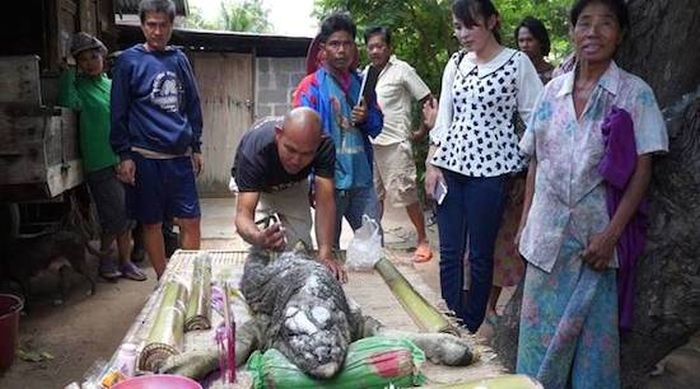 A Strange Buffalo Was Recently Discovered In Thailand (3 pics + video)
