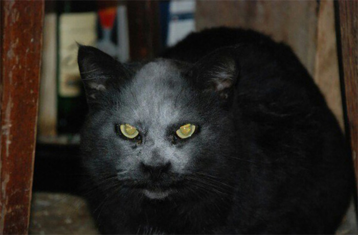 Cat Looks Like A Demon After Getting Covered In Flour (3 pics)