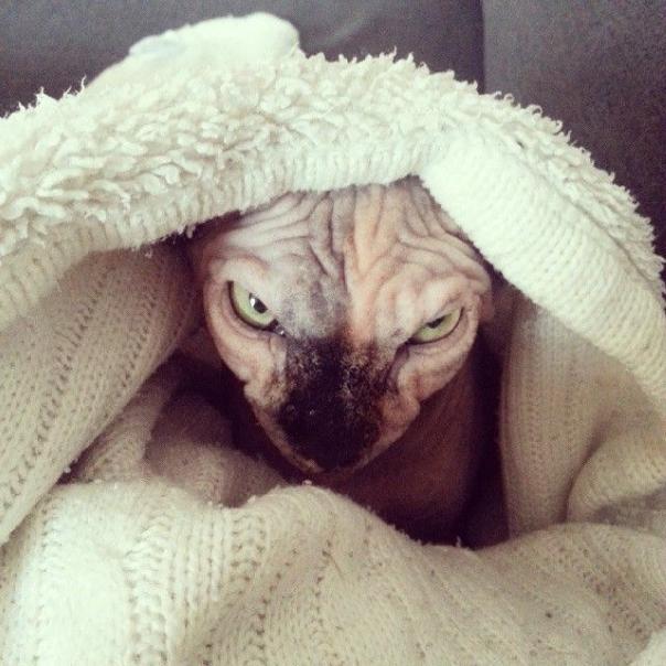 Evil Cats Making Evil Faces (18 pics)