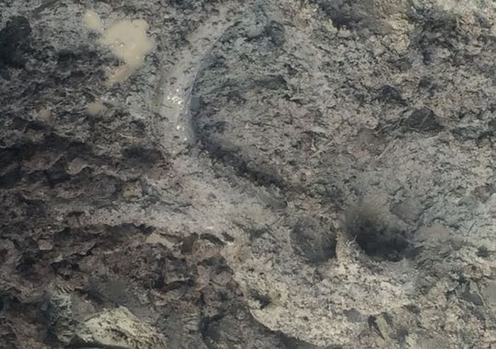 Woolly Mammoth Bones Discovered In Michigan Soybean Field (10 pics)