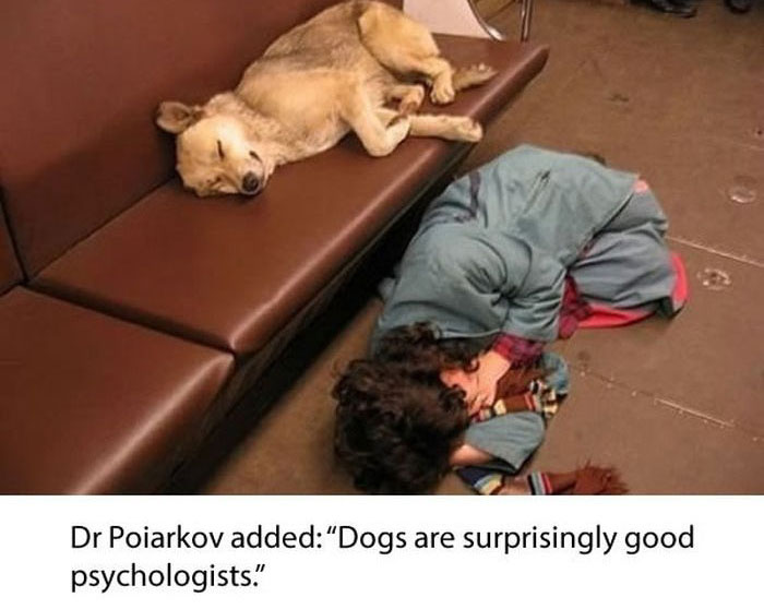 Stray Dogs Ride The Subway In Moscow  (11 pics)