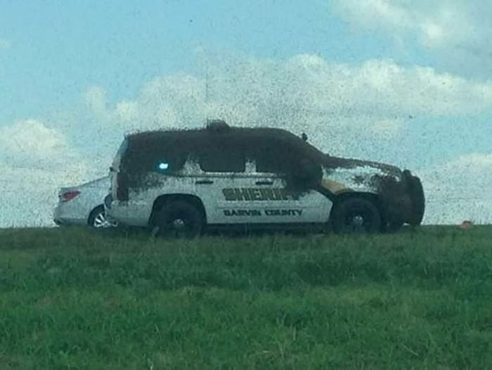 Thousands Of Bees Set Free During Car Accident (3 pics)