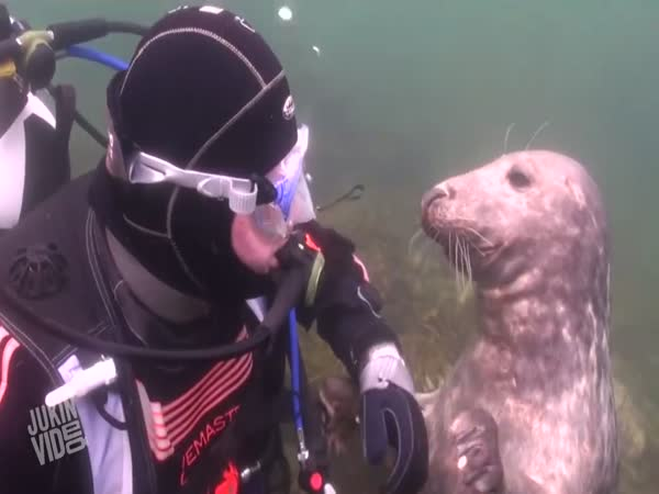Diver Playing With A Seal