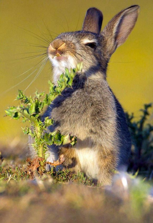 Hungry Rabbit Tries To Eat The Wrong Plant (4 pics)