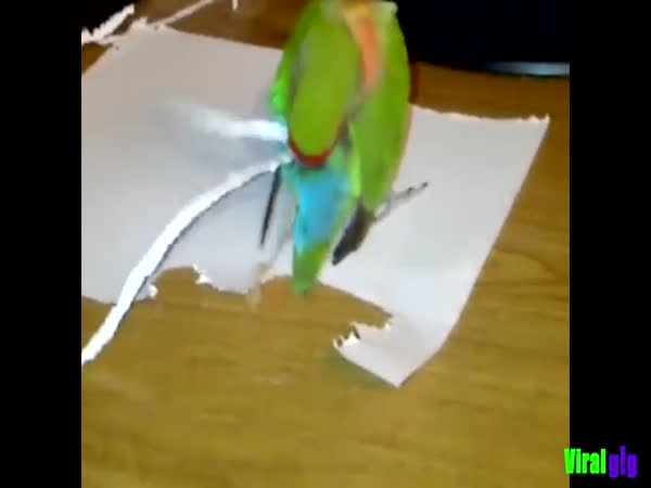 Parrot Making Itself A New Tail