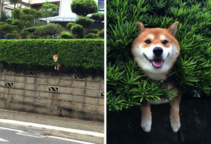 It Didn't Take Long For These Dogs To Realize That They Messed Up (34 pics)