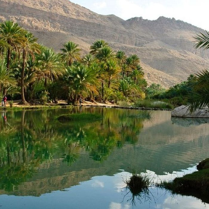 Salalah Transforms Into A Beautiful Oasis (9 pics)
