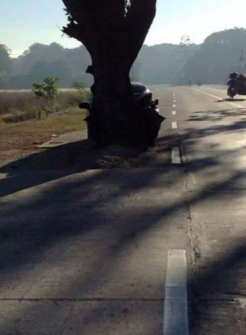The Middle Of The Road Is A Really Bad Place For A Tree (3 pics)