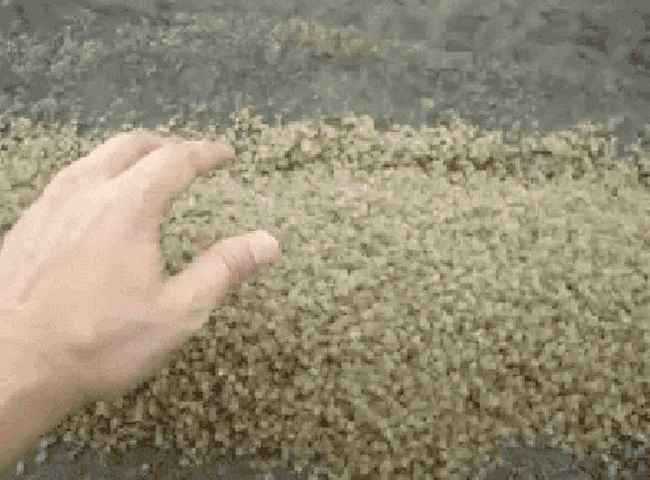 That's A Lot Of Baby Crabs (2 gifs)