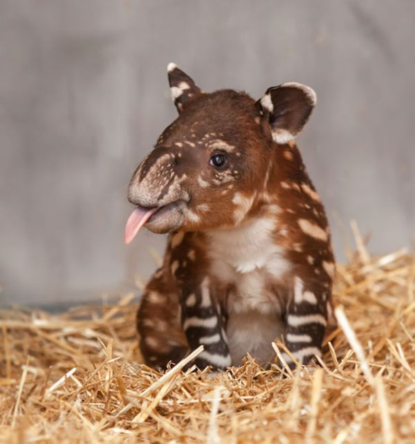 The Most Adorable Baby Animals Of All Time (35 pics)