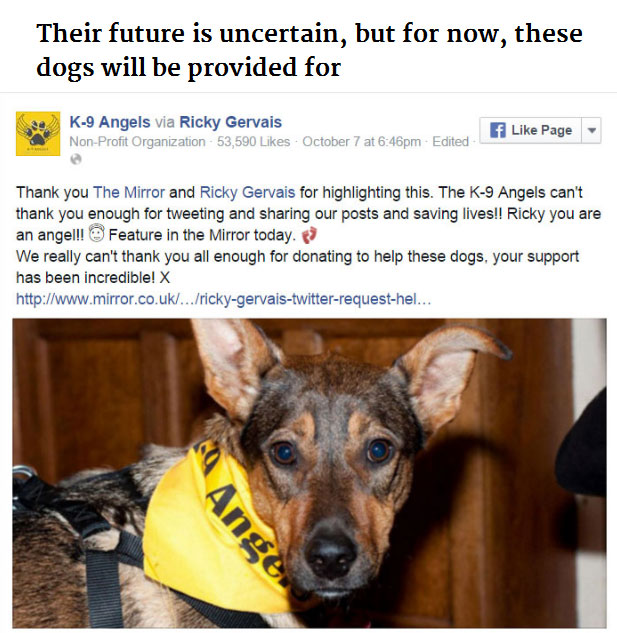 Ricky Gervais Used Twitter To Save Hundreds Of Dogs (10 pics)