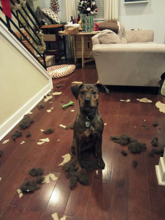Animals Try Not To Look Guilty After Destroying Things (19 pics)