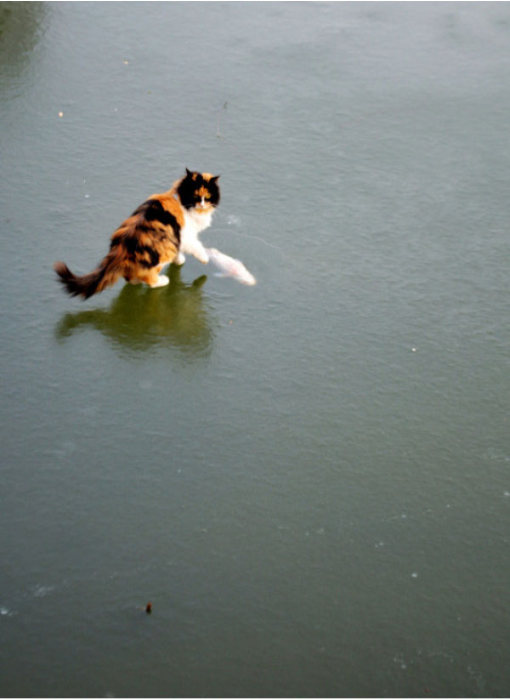 Cats Try To Go Ice Fishing (10 pics)