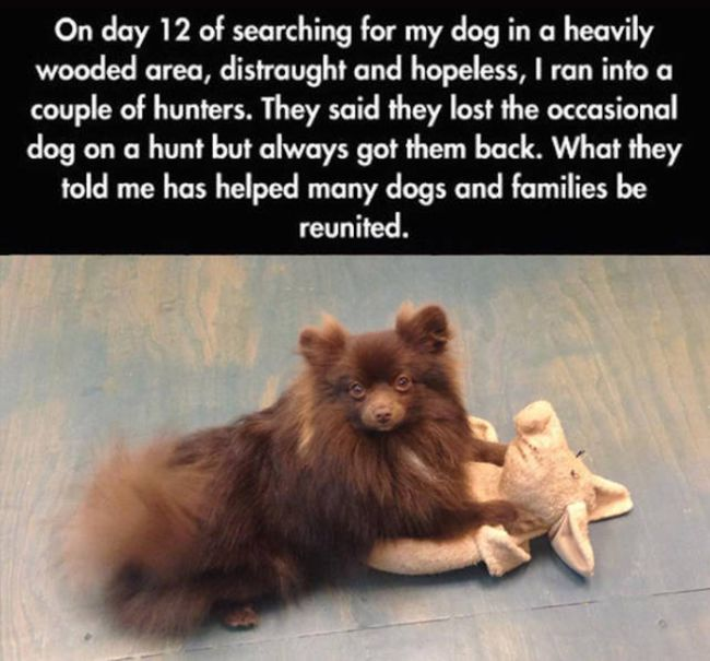 Tips And Tricks That Will Help You Find Your Lost Dog (9 pics)