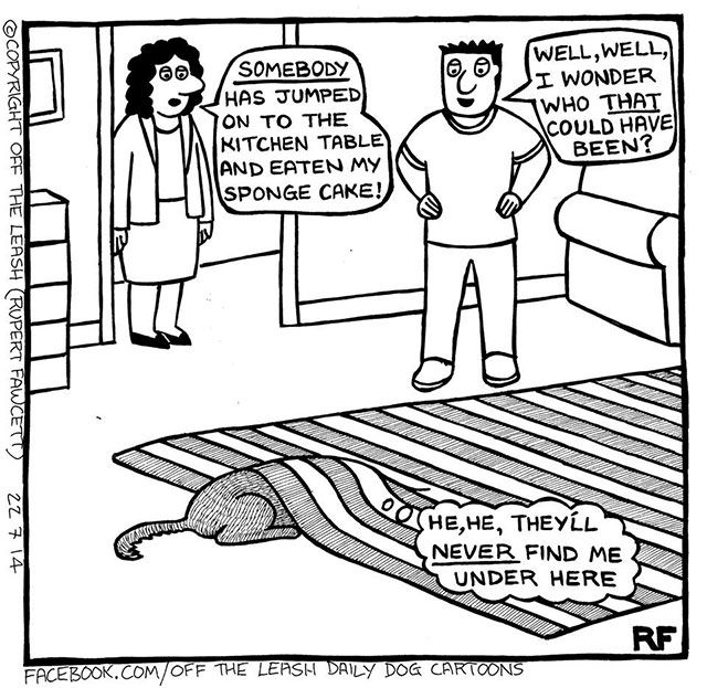 15 Comics That Describe What Life Is Like When You Own A Dog (15 pics)
